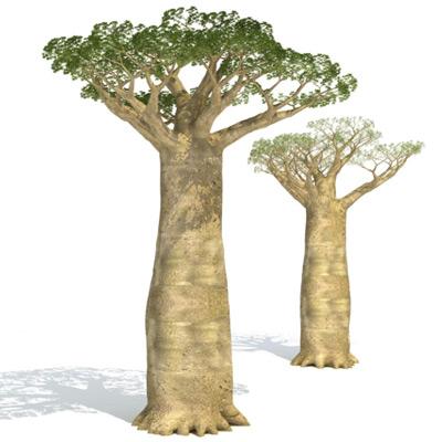 GrowFX-Baobab