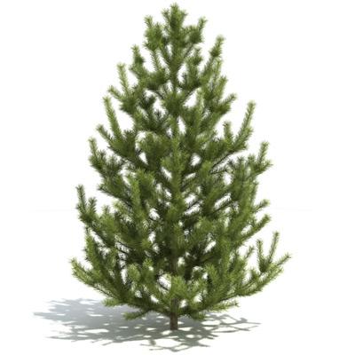 GrowFX-Pine
