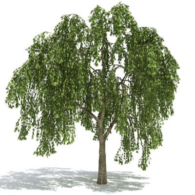 GrowFX-Willowtree