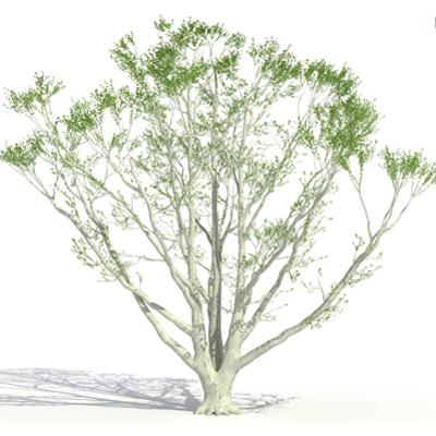 GrowFX-Oak